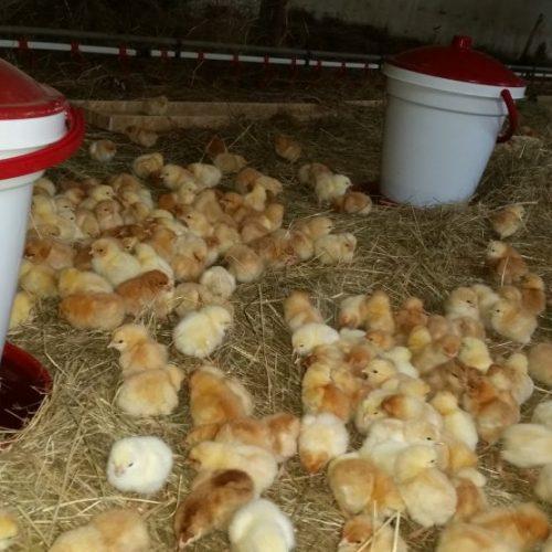 Predaj vajec z voľného regionálneho chovu aj v predajni Karpatský gazda.